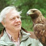 Il naturalista Attenborough: «fede in Dio compatibile con evoluzione biologica»