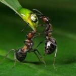 Entomologi sfatano l'altruismo negli animali: «solo l'uomo ne è davvero capace»