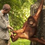 Scienziati si accorgono che l'uomo è uomo e la scimmia è scimmia