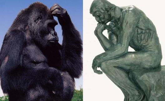 scimmia uomo