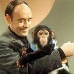 """L'etologo Desmond Morris: «Mi sbagliavo, l'uomo non è una """"scimmia nuda""""»"""