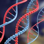 Gli scienziati: «l'uomo è l'unica eccezione di non dipendenza dal DNA»