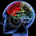 Le neuroscienze portano l'uomo al centro: il cervello non ha eguali nel cosmo