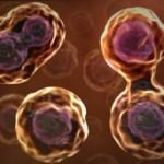 Continua il successo delle staminali adulte (al contrario delle embrionali)