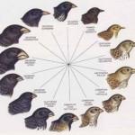 A sostegno di una nuova teoria dell'evoluzione (I° parte)