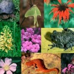 Biodiversità tutelata maggiormente nelle aree cristiane