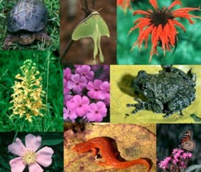 Biodiversita