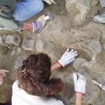 Sono cattolici anche i principali paleontologi ed evoluzionisti spagnoli