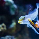 L'autocoscienza negli animali, un abbaglio scientifico?